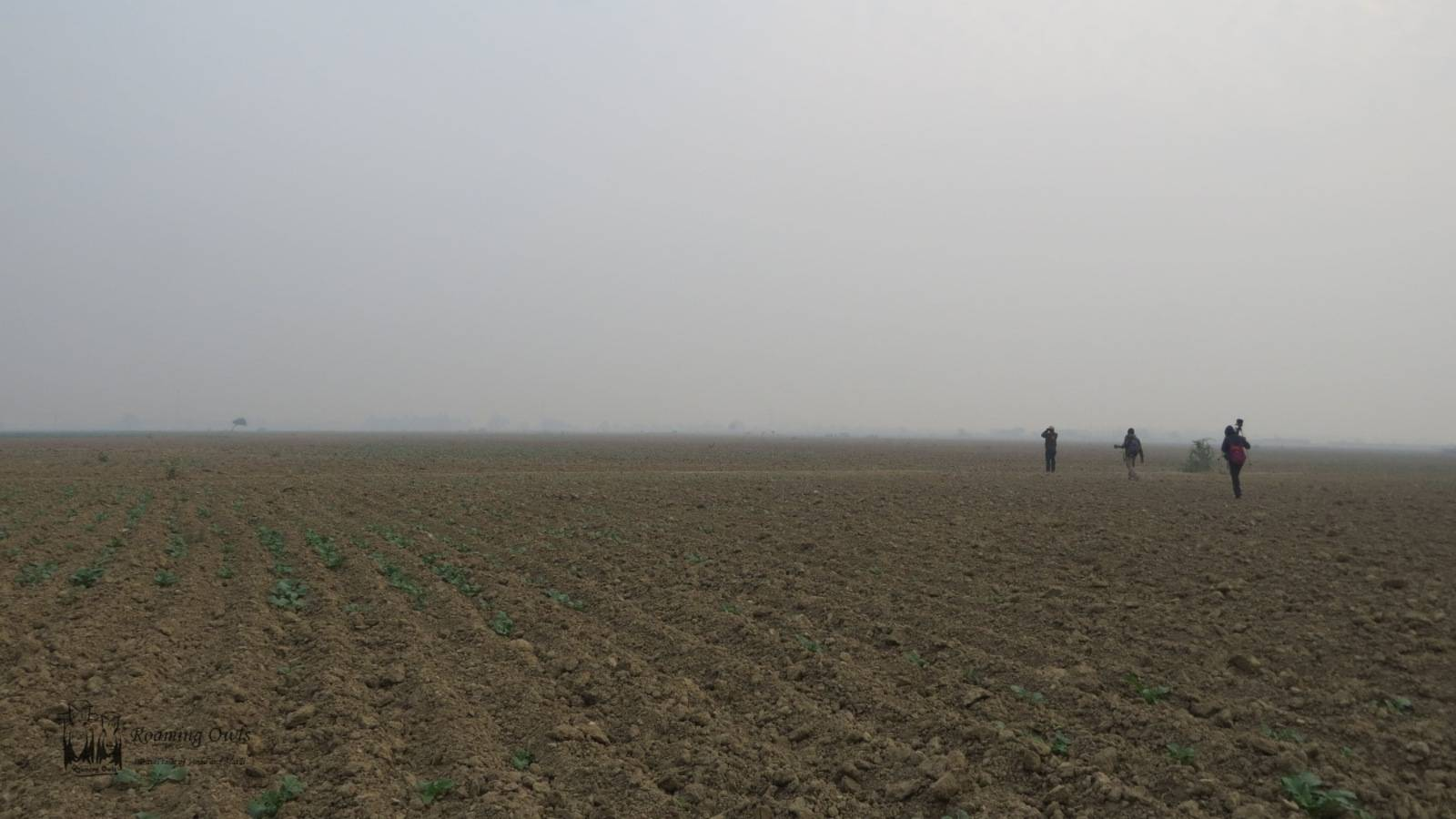 Indian Courser Search,Rajasthan barren agricultural field,Bharatpur Bikaner,Keoladeo national park