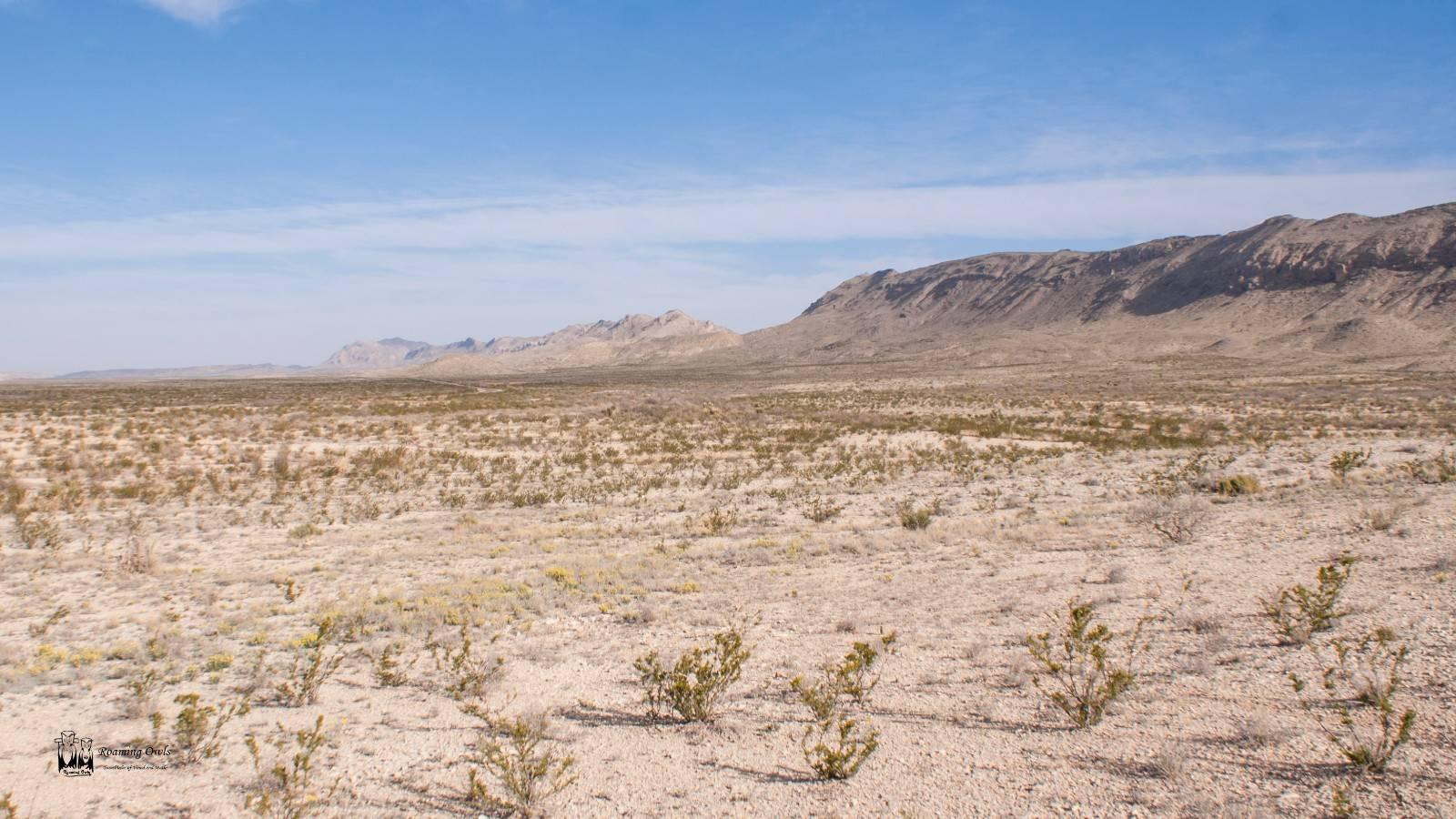 Chisos mountain range, big bend national park,yellow flowers, desert,barren land