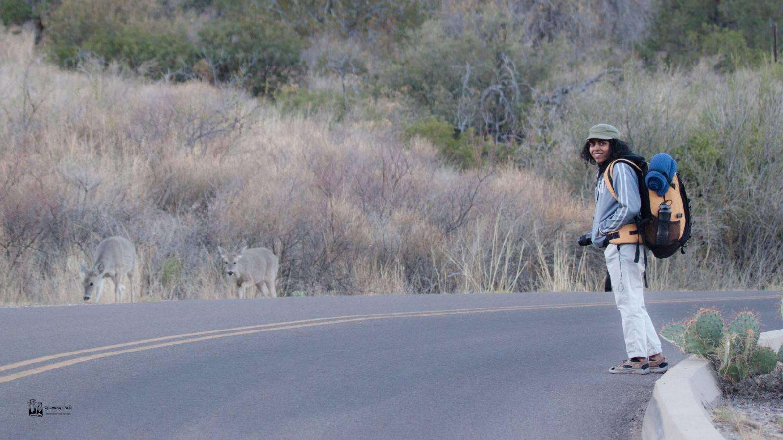 white tailed deer,bigbend national park,emory peak,chisos mountain,trekking