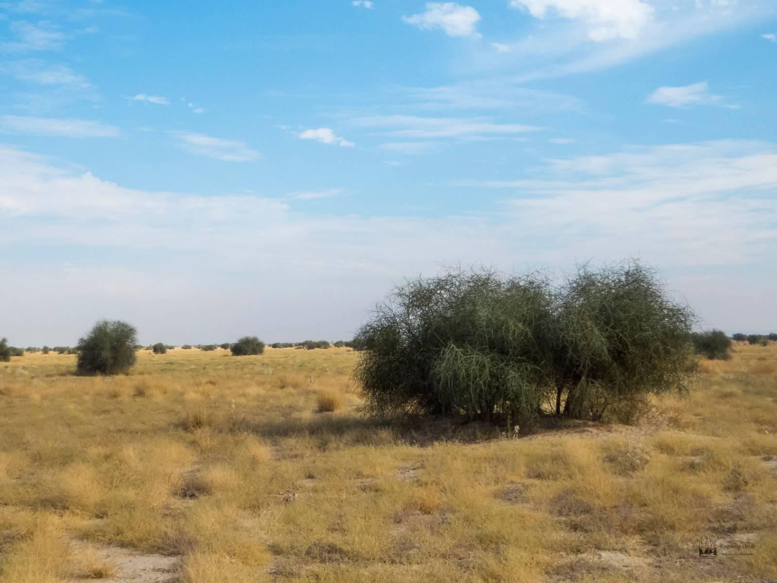Desert National Park , bushes
