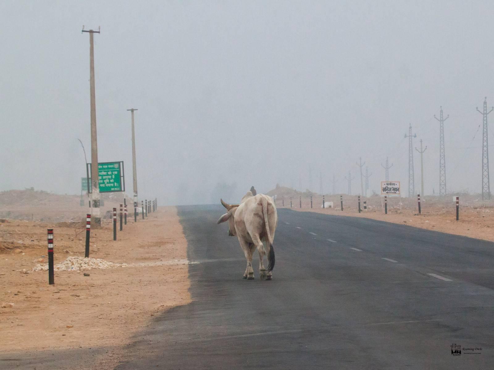 Desert National Park , empty road
