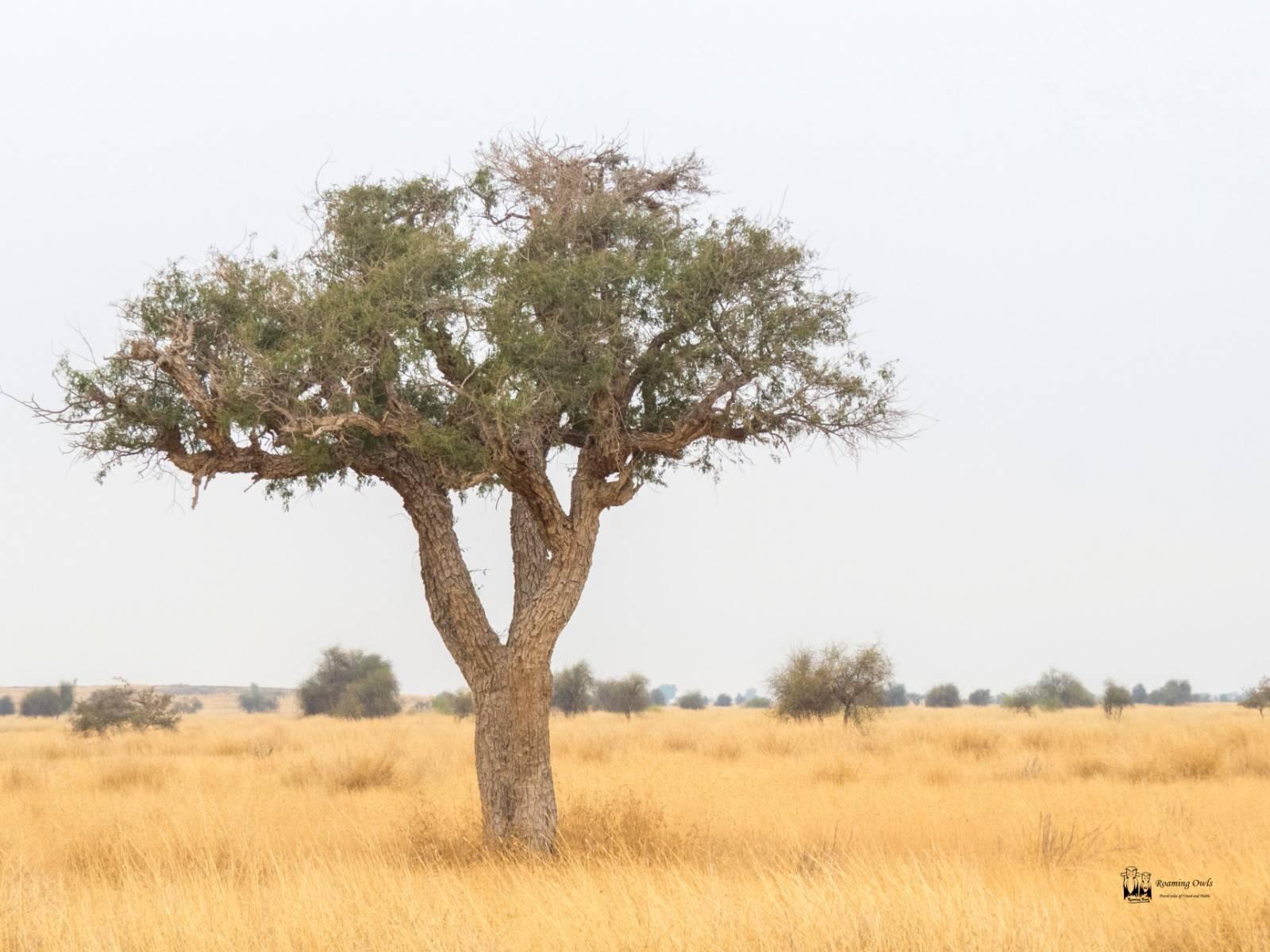 Desert National Park , tree