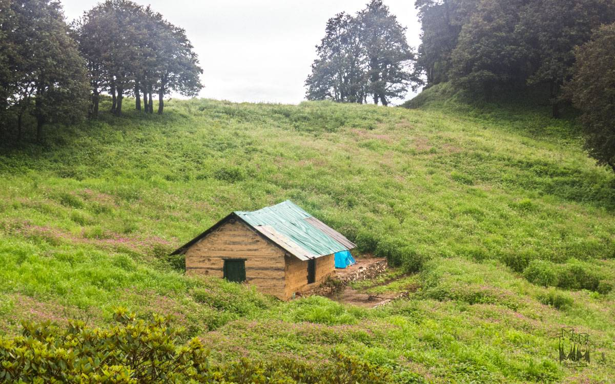 Forest patrolling hut , himalayan pink balsam , Dhela