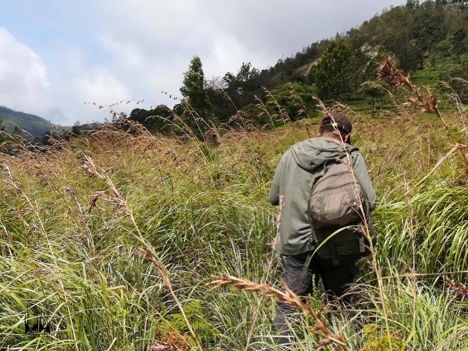 Vinod Sadhasivan,Nilgiri Grassland,Python habitat,neelkurinji,strobilanthes