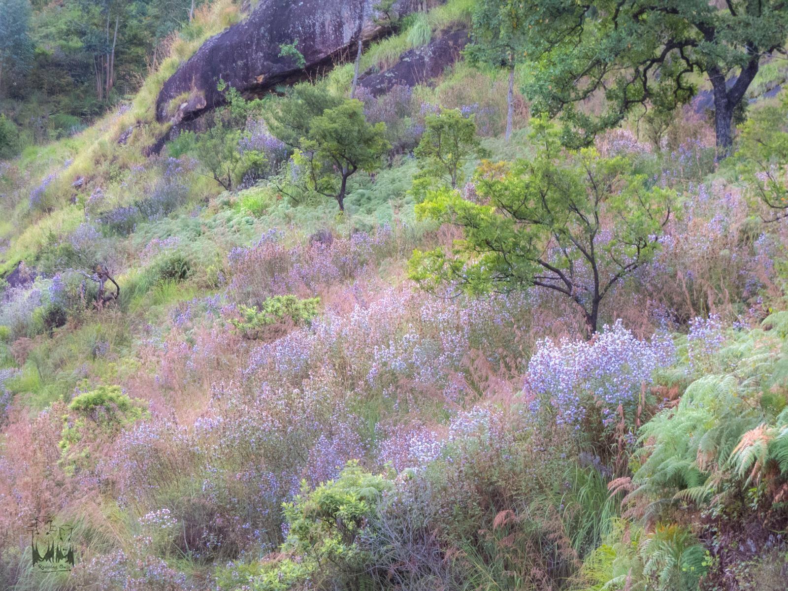 பழனி மலை தொடர்ச்சியில் குறிஞ்சி மலர்களை தேடி ஒரு பயணம்