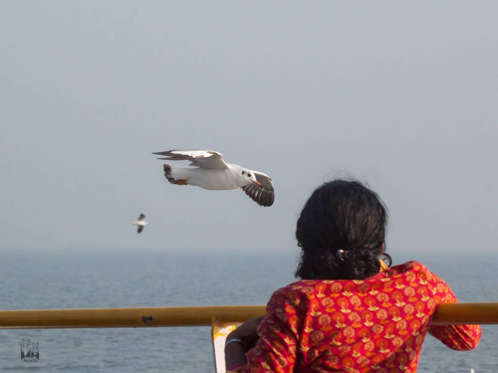 Mandwa boat travel,Sea gull glide,Mumbai sea birds