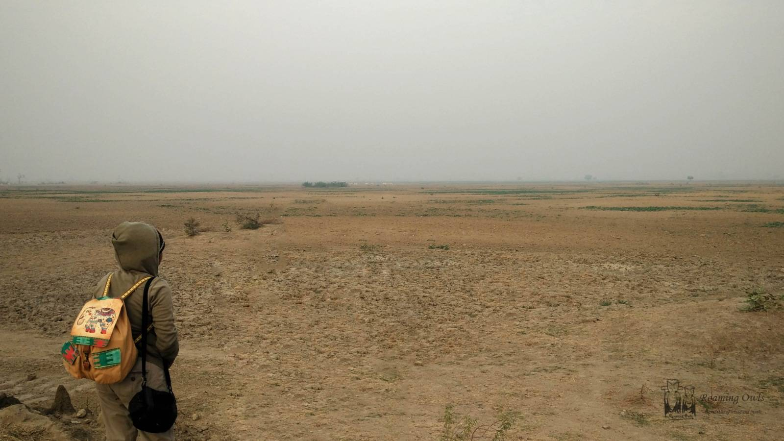 Rajasthan barren land,Indian Courser Search,Dry land Indian Birds