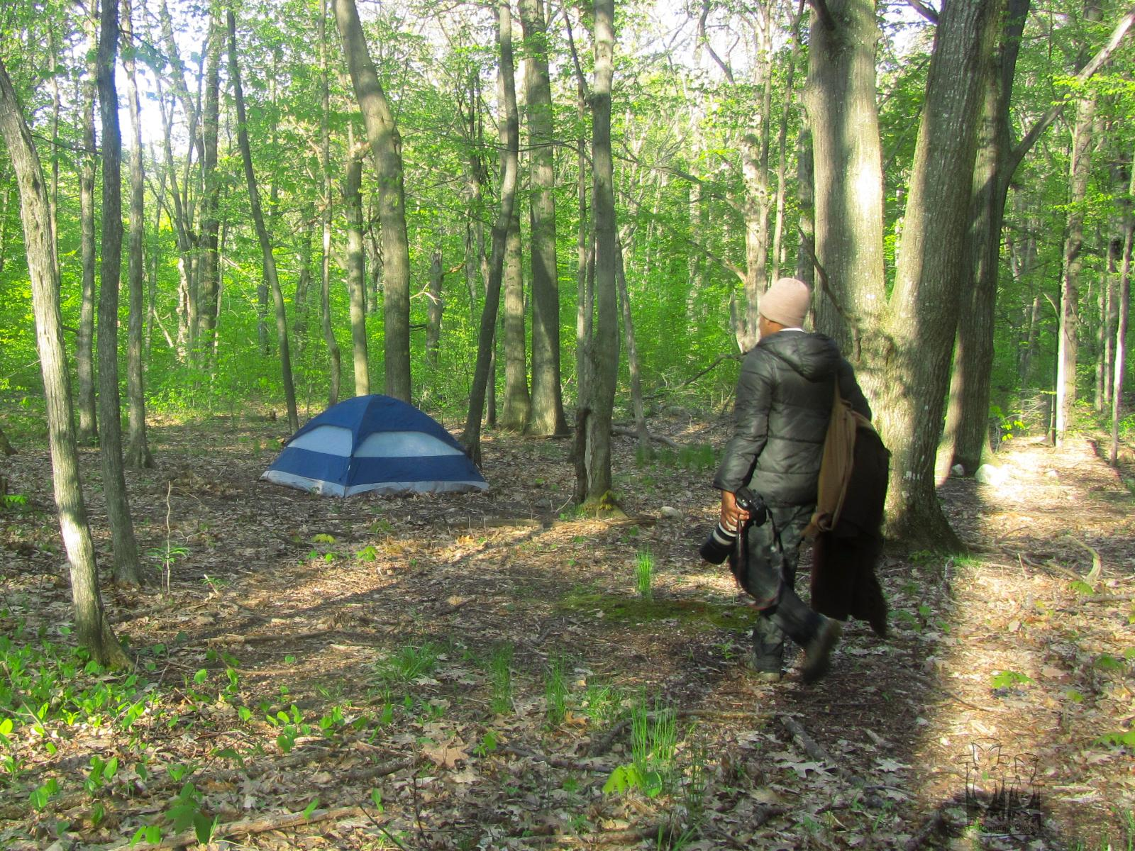 North Manitou Island,North Monitou tent stay,North manitou forest