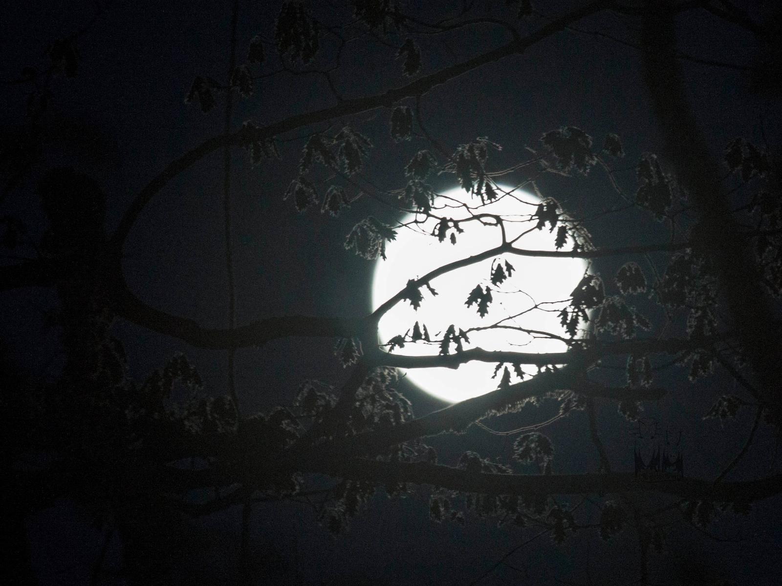 Lake Full Moon,North Manitou Island