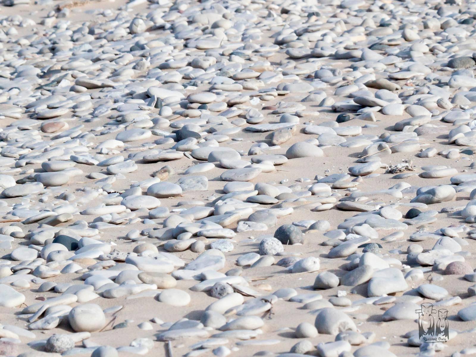 North Manitou Island,Lake Michigan Stones, Lake Shore Shells stones