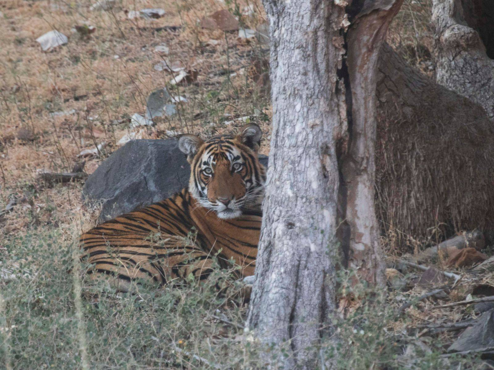 Ranthambore National Park – In Search of Tigers