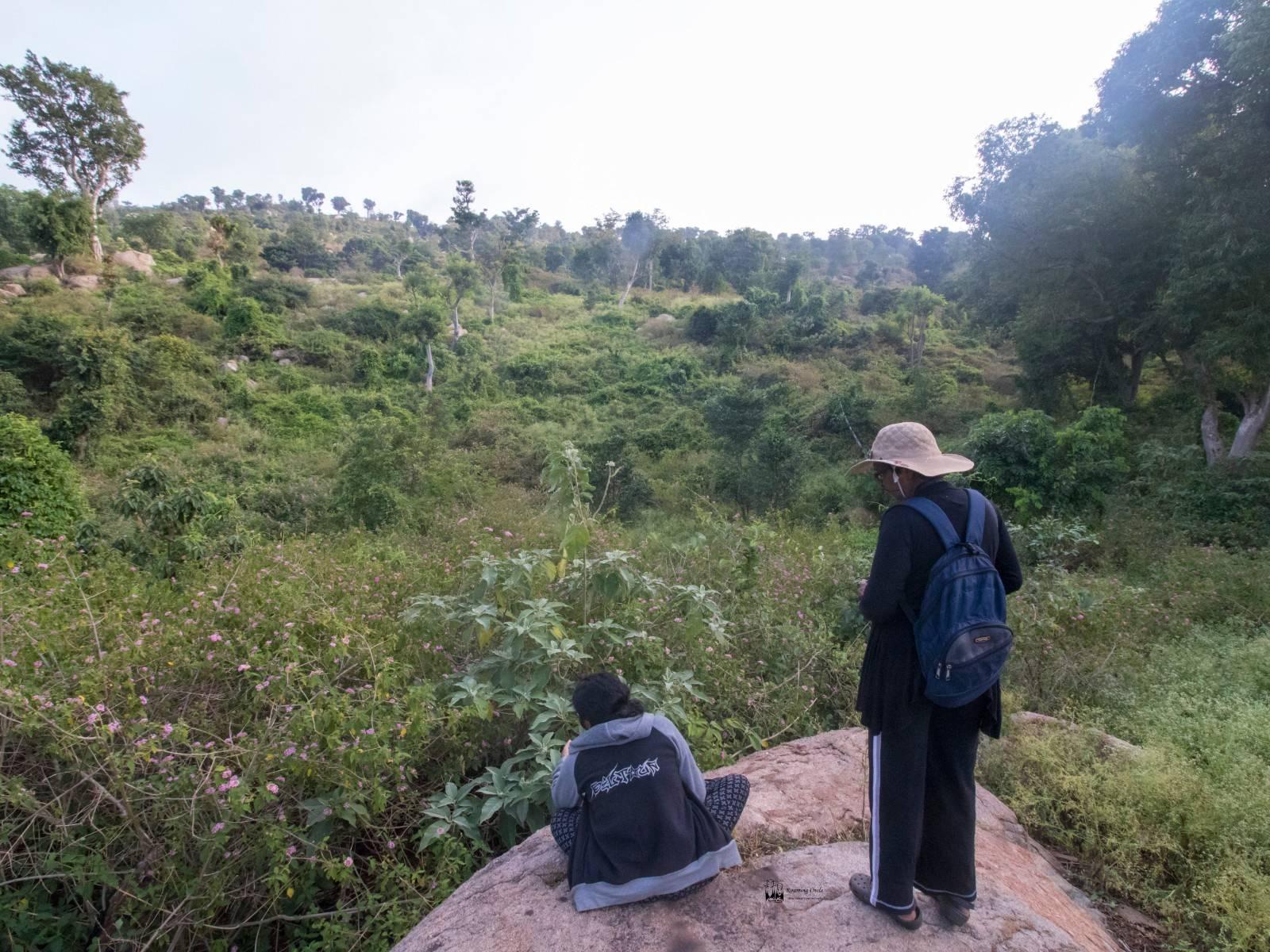 Yelagiri, birding