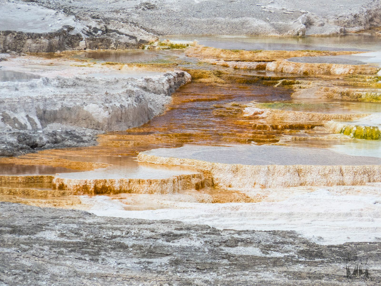 Yellowstone national park, Hot springs , orange bacteria