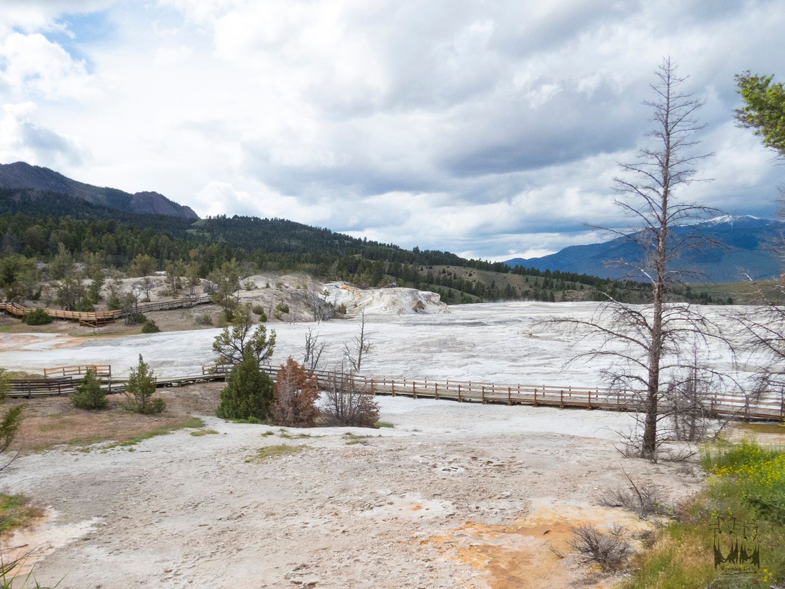 Yellowstone national park, white parched soil , Hot springs