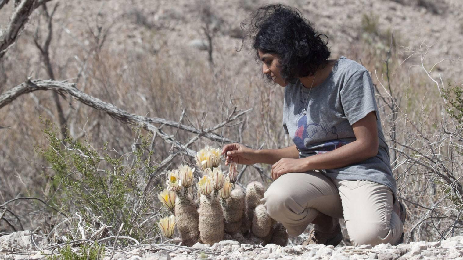 Big bend national park , Mathi , Cactus
