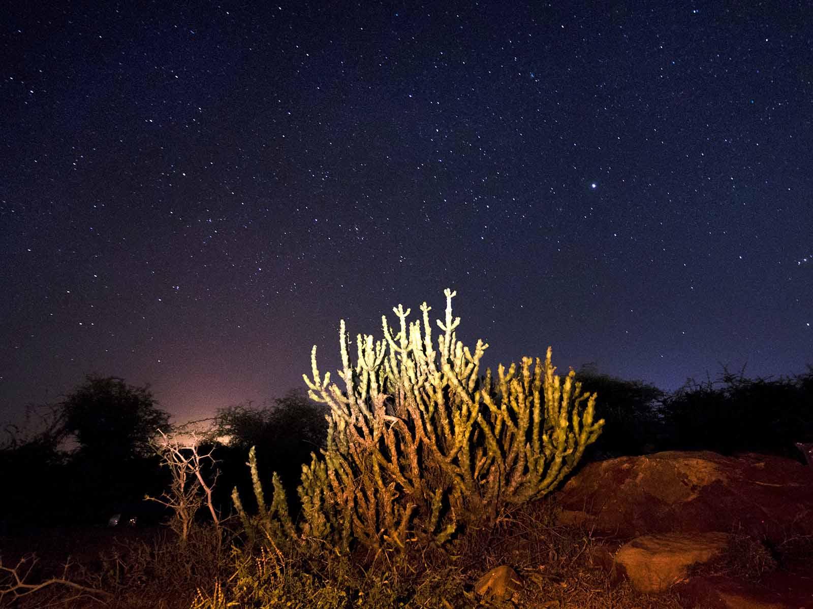 Gandikota , castor plant, stars, night sky