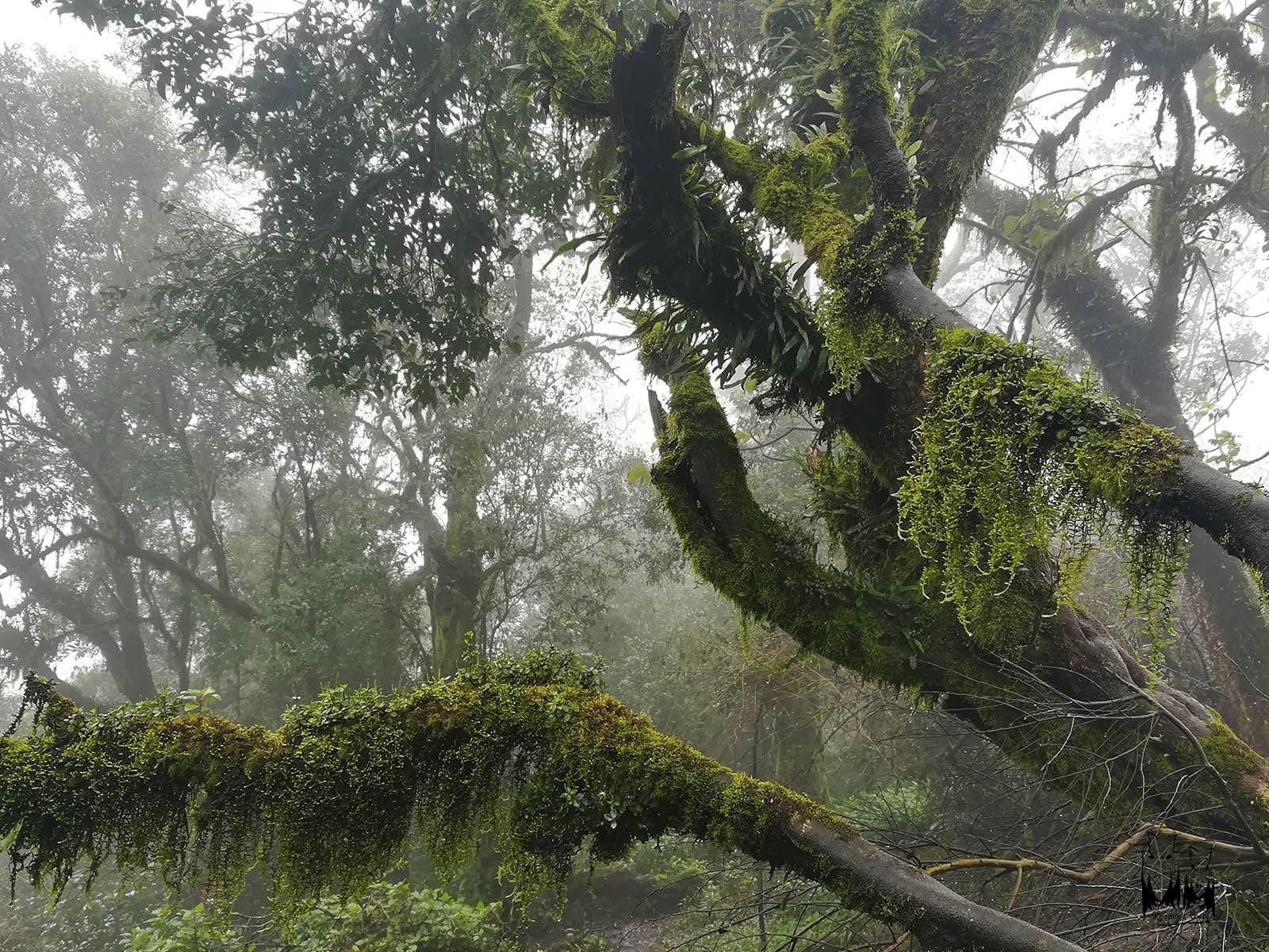 Ferns mosses gopalswamy betta,mysore bangalore tourist spot
