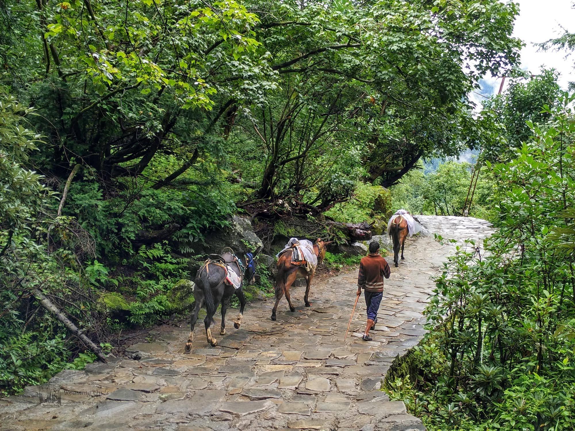 Hemkund sahib path, mules Hemkund,Ghangaria Govindghat trek, Ghangaria Mules trek path