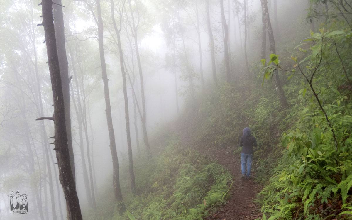 Mist covered forest, mathi, latpanchar, birding