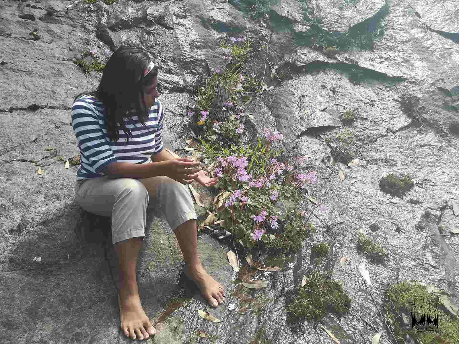 இரவிக்குளம் பூங்காவில் குறிஞ்சி மலர்கள்…