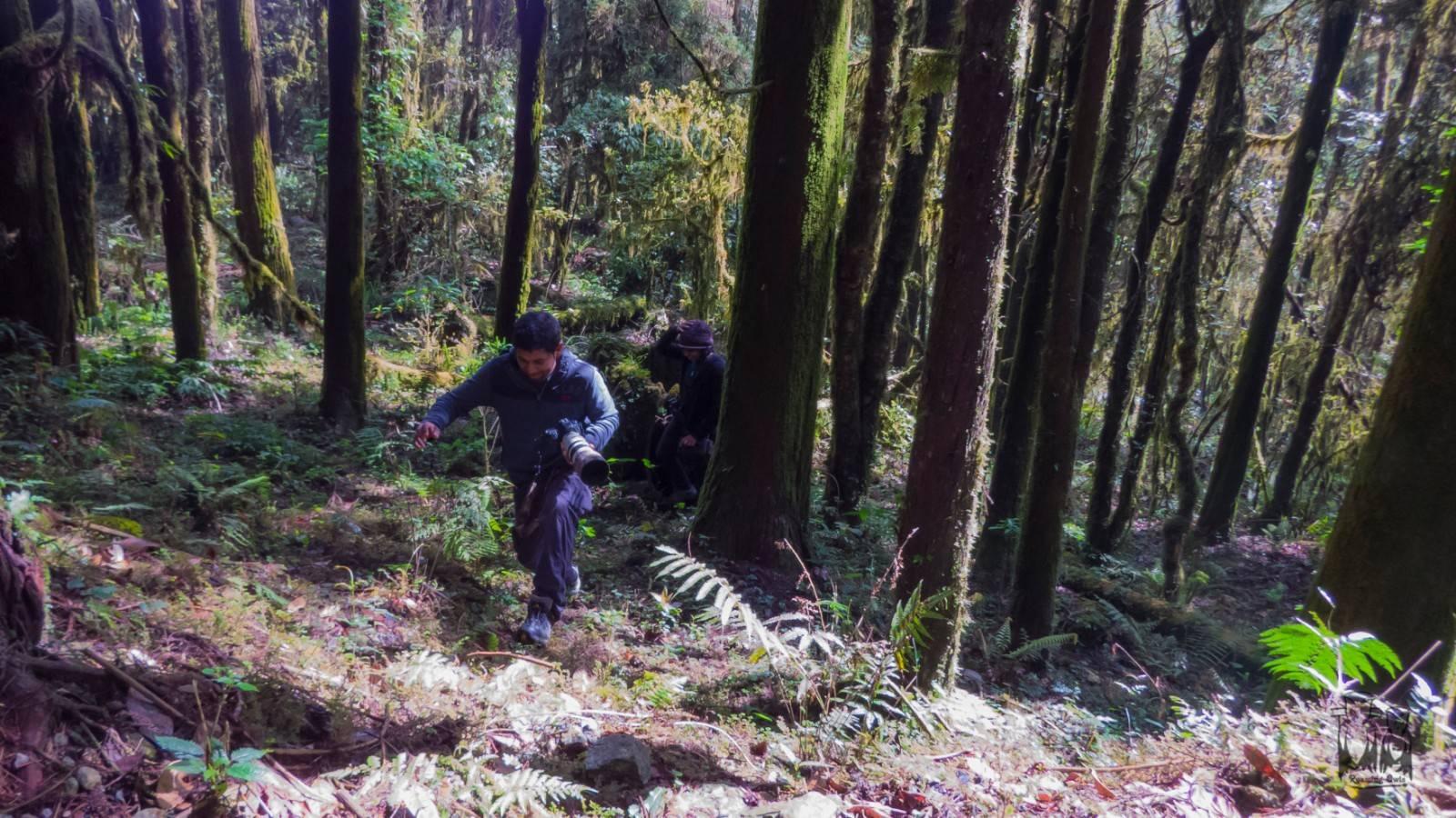 Neora valley national park, trekking, birding
