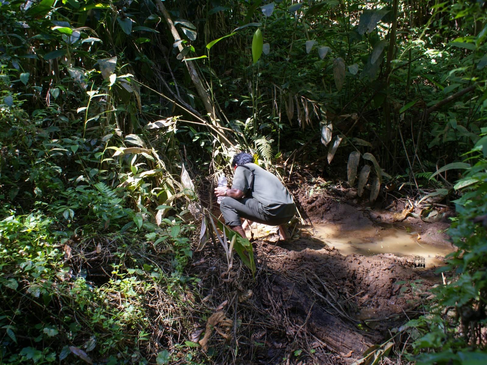 Parambikulam Tiger Reserve, Karimala Trekking, natural water,forest walk