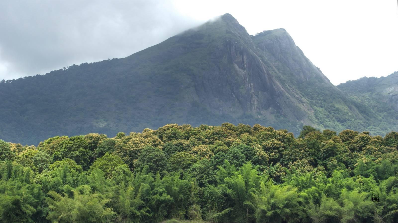 Karimala peak,Parambikulam Tiger Sanctuary,Trekking