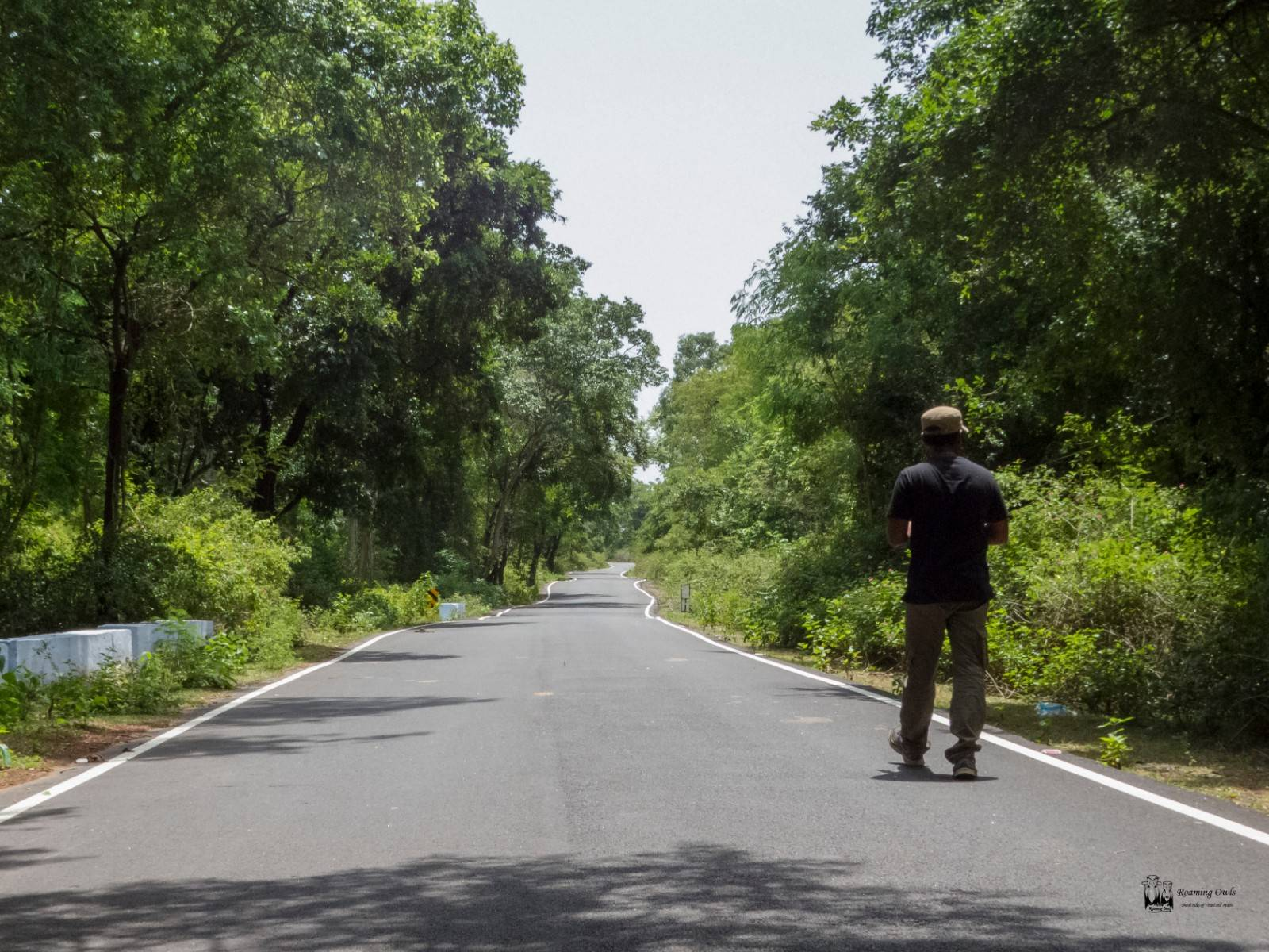 forest road, polur reserve forest
