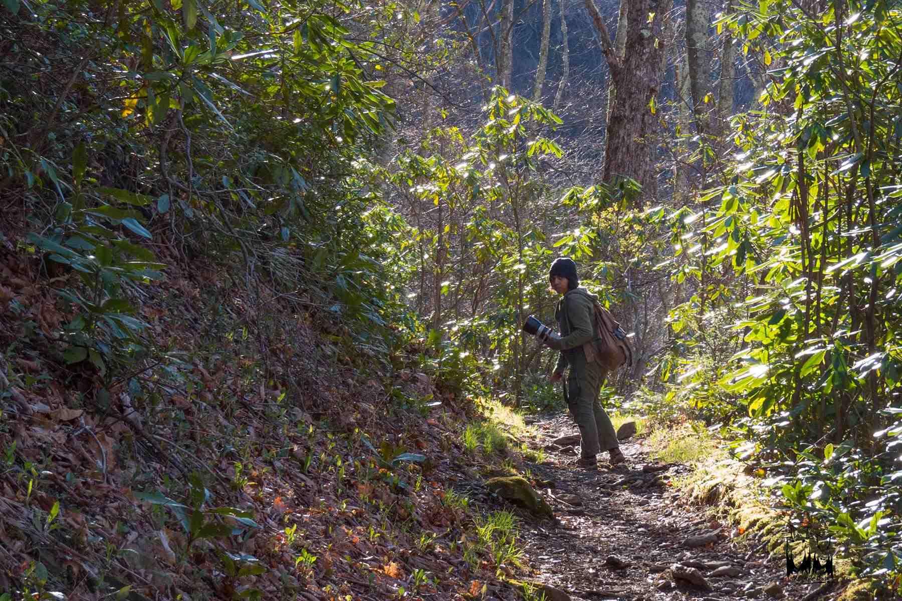 Smokey National Park,Spring smokeys appalachian range,Paulmathi Vinod