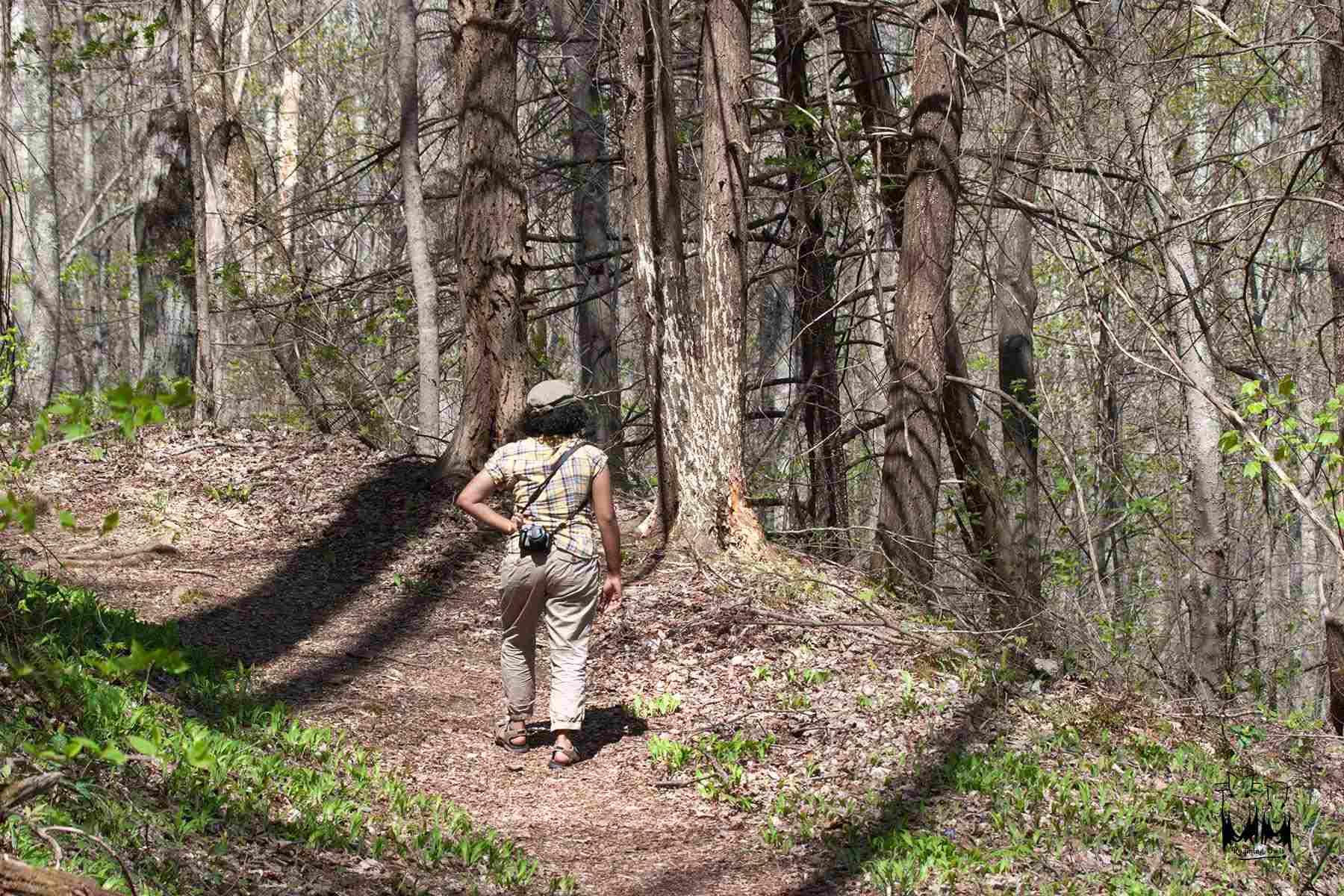 Smokey Mountain National Park,Fringed Phacelia Walk