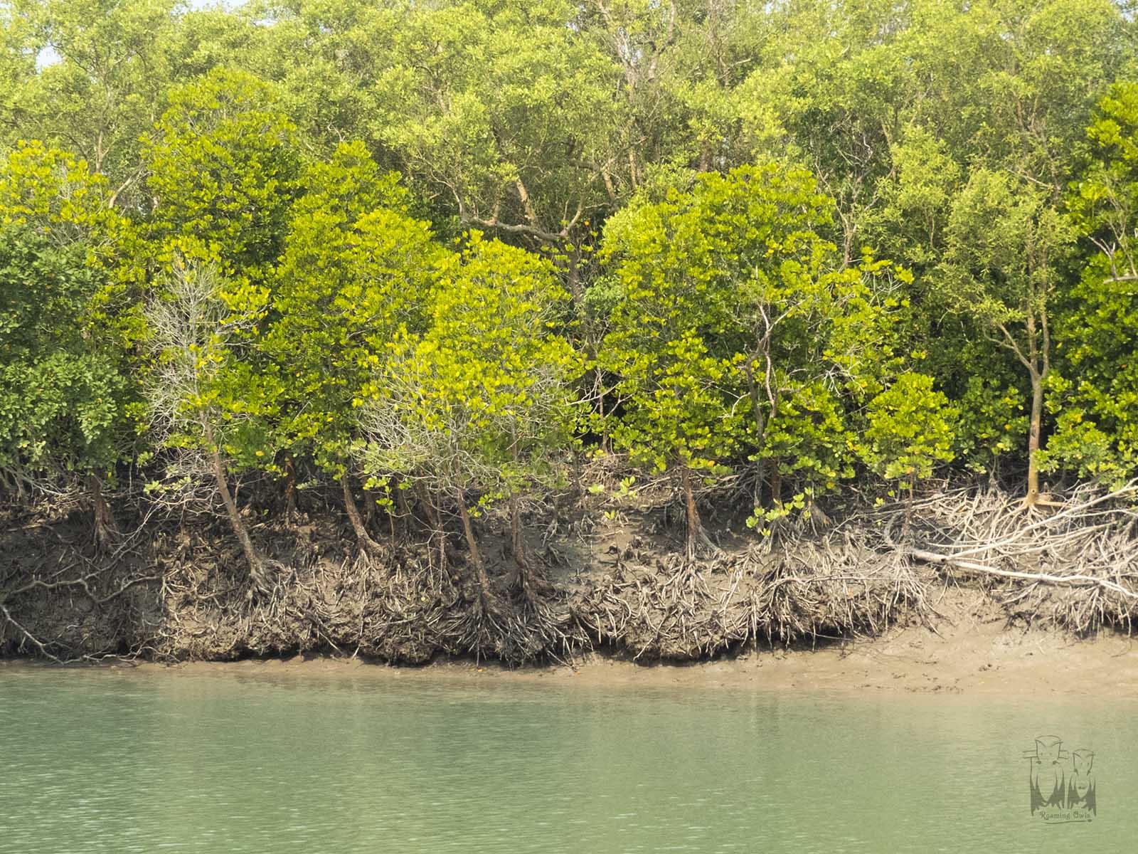 Sundarbans Wildlife Watching