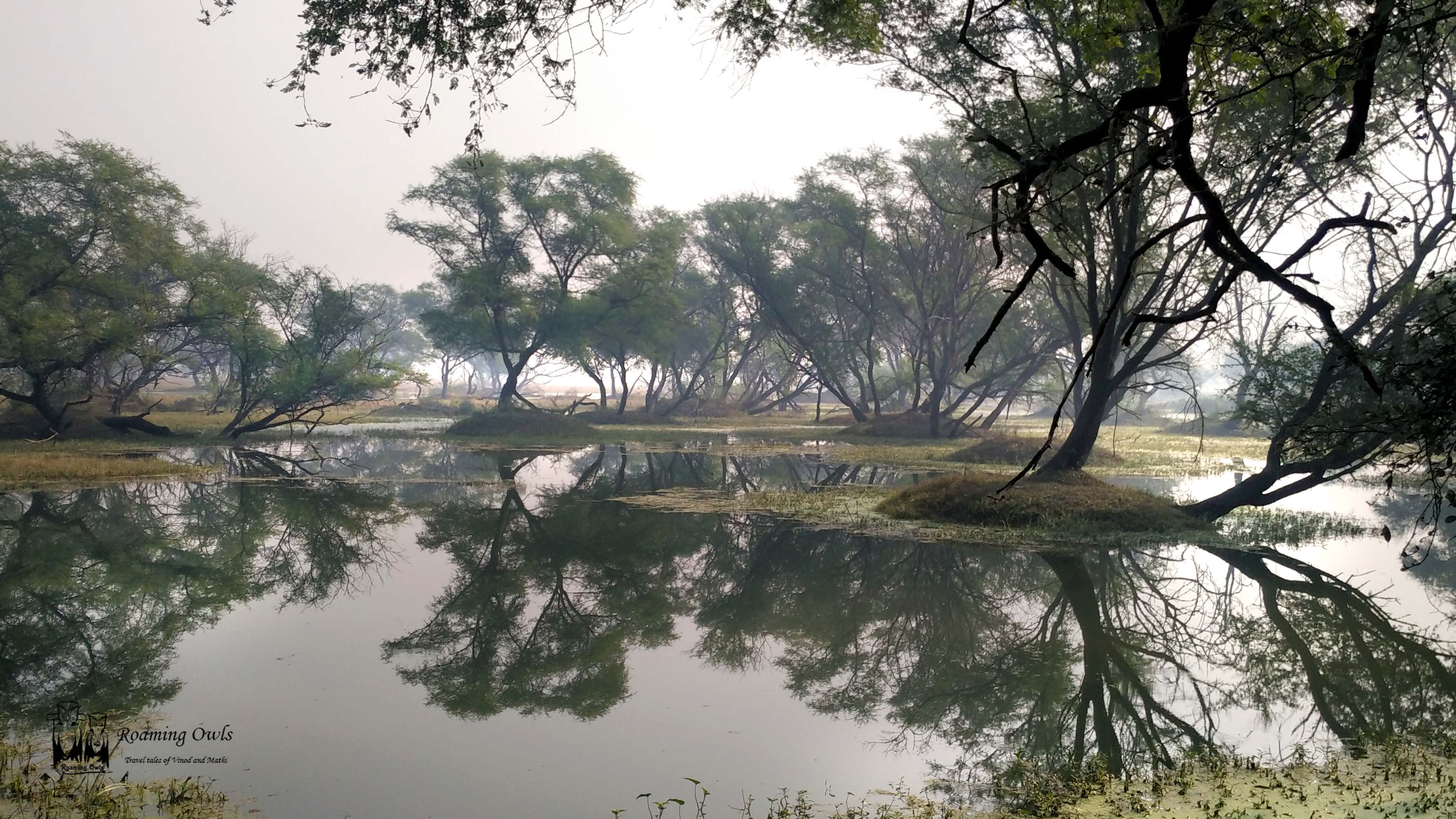 Keolodeo national park, bharatpur, india, wetlands