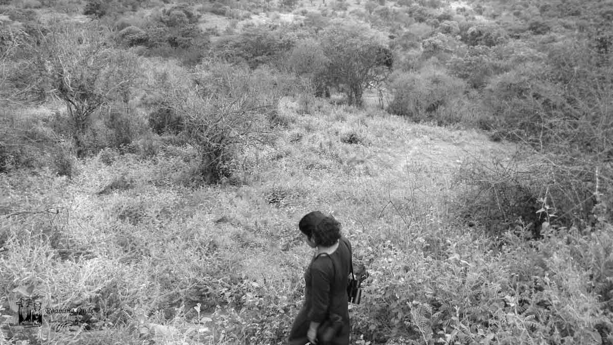 chinnar wildlife sanctuary,chinnar tree shrub,paulmathi vinod,chinnar trekking