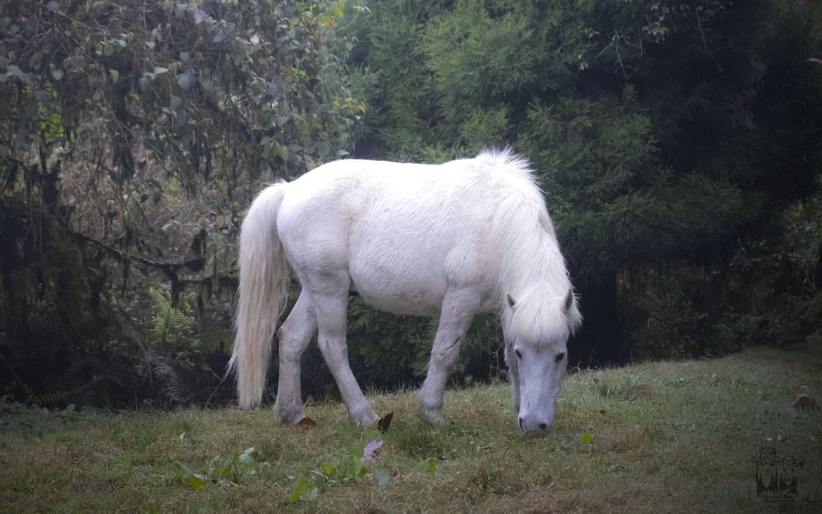 White horse , neora valley, himalayas