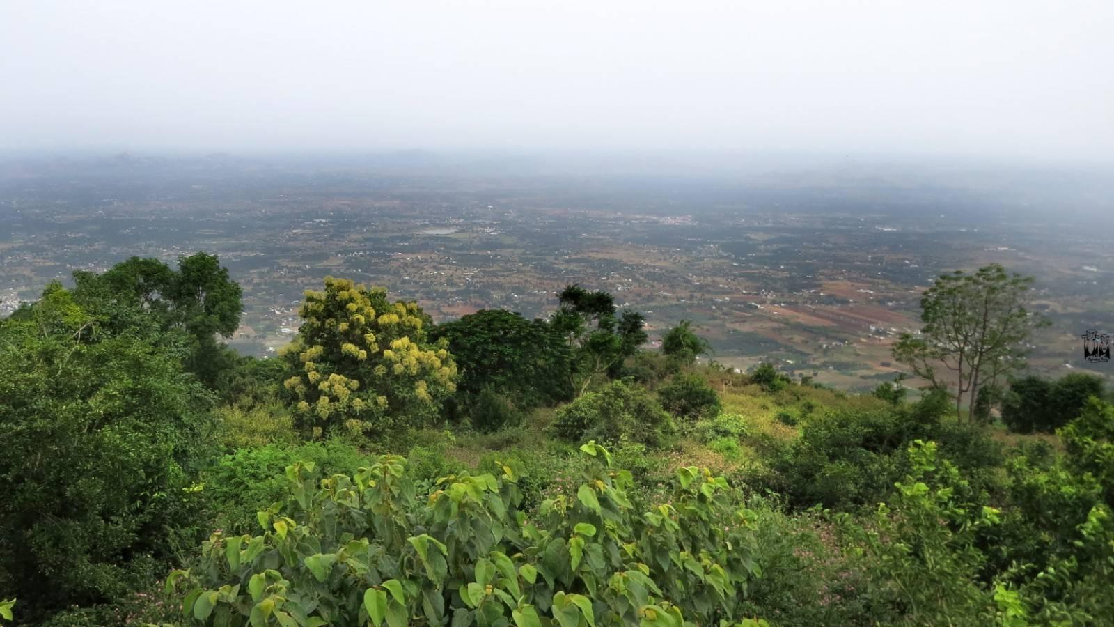 yelagiri hill station,tamilnadu tourist spot,chennai hill station
